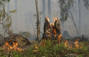 В Ишимбайском районе ликвидировали возгорания в лесном фонде