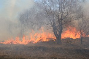 Сокрытие лесного пожара может обернуться штрафом до пяти тысяч рублей