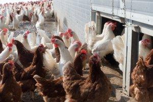 В Башкирии возникла реальная опасность заражения птичьим гриппом