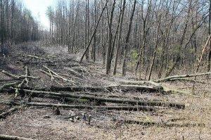 Идея о сборе сухостоя в лесах Башкирии легла в основу федерального «закона  ...