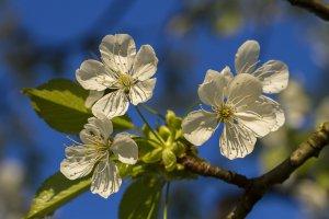 2 мая – праздники и события