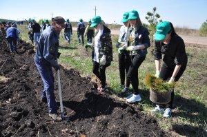 Ишимбайские школьники помогли высадить сосны