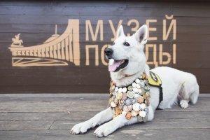 Школьники Башкирии могут нарисовать «Портрет фронтовой собаки»