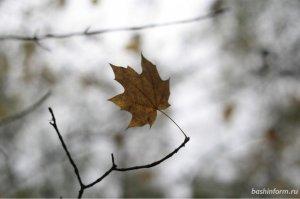 Синоптики прогнозируют в Башкирии заморозки и снег