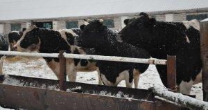 В Ишимбайском районе принимают меры для увеличения поголовья скота