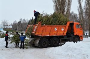 Из Салавата вывезли более 3 тысяч отслуживших новогодних елок