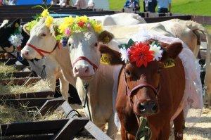 Башкирия намерена значительно увеличить экспорт мясной и молочной продукции
