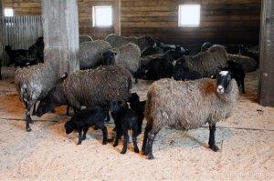 Идентификация животных в Башкирии завершится к 1 апреля
