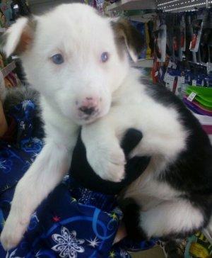 В Ишимбае женщина спасла щенка от смерти