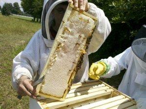 В Ишимбае планируют расширять пчеловодство
