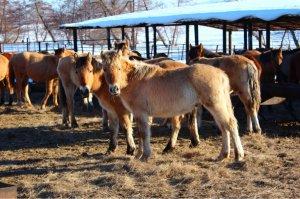Радий Хабиров пригласил жителей Башкирии на первый конный турнир среди районов республики